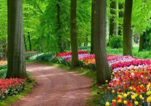 Keuntungan-Memiliki-Vertikal-Garden