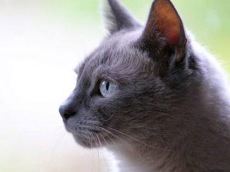 nama nama kucing