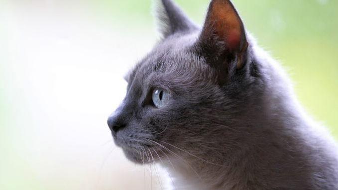 100 Nama Kucing Jantan Paling Bagus Di Dunia Beserta Artinya Majalah Indonesia
